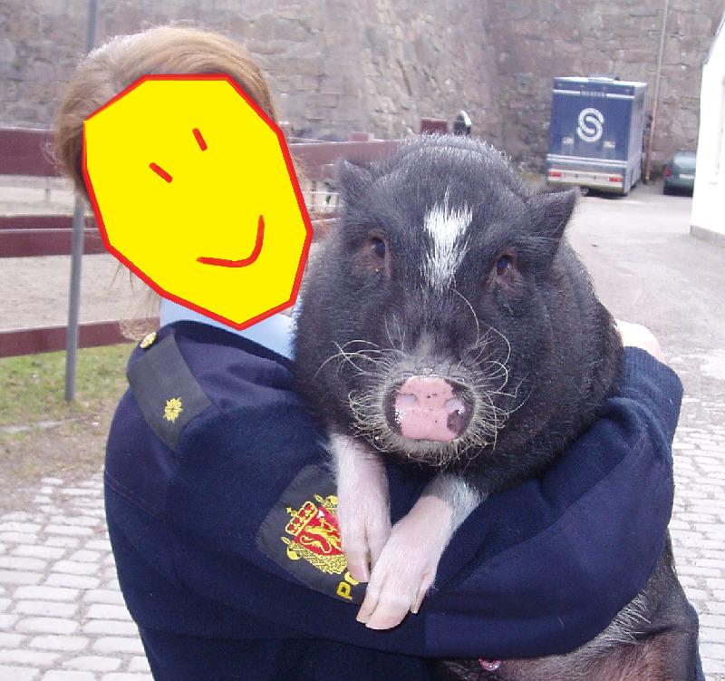 Søt gris